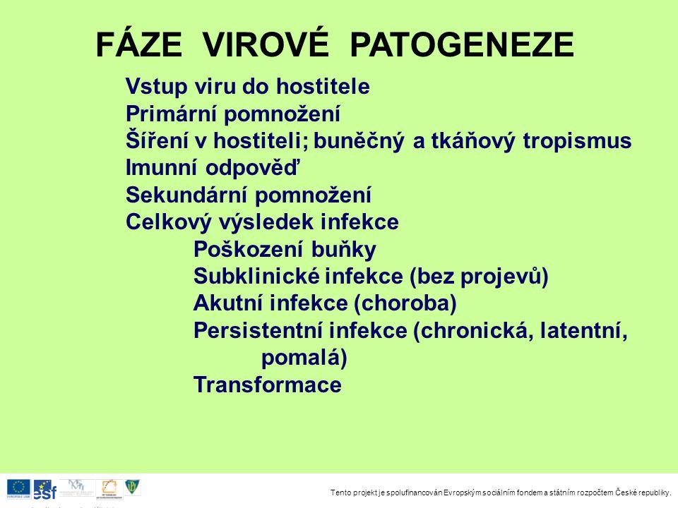 FÁZE VIROVÉ PATOGENEZE