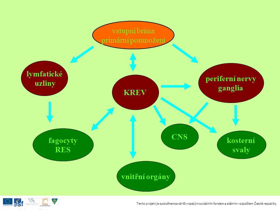 vstupní brána primární pomnožení. lymfatické. uzliny. periferní nervy. ganglia. KREV. CNS. fagocyty.
