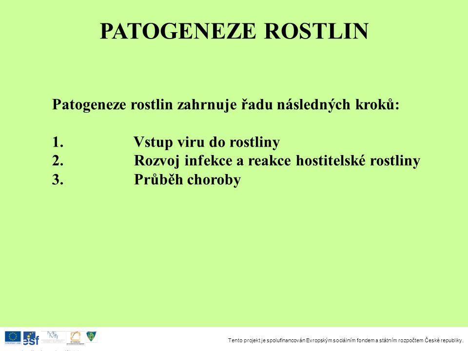 PATOGENEZE ROSTLIN Patogeneze rostlin zahrnuje řadu následných kroků: