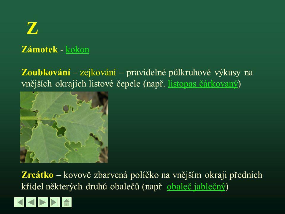 Z Zámotek - kokon. Zoubkování – zejkování – pravidelné půlkruhové výkusy na. vnějších okrajích listové čepele (např. listopas čárkovaný)