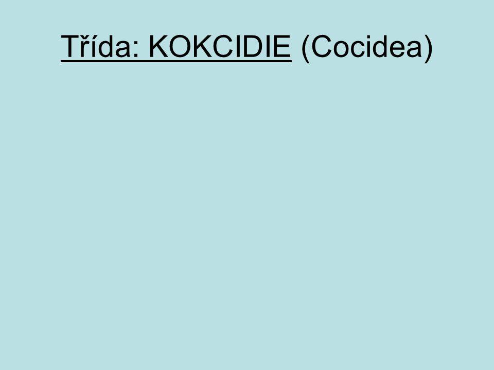 Třída: KOKCIDIE (Cocidea)