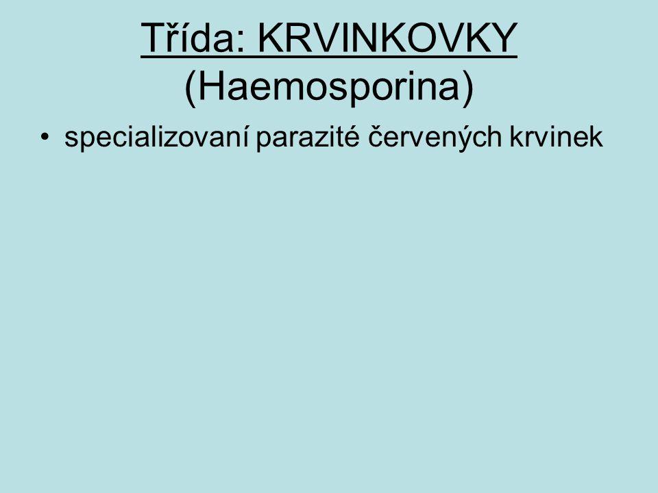 Třída: KRVINKOVKY (Haemosporina)