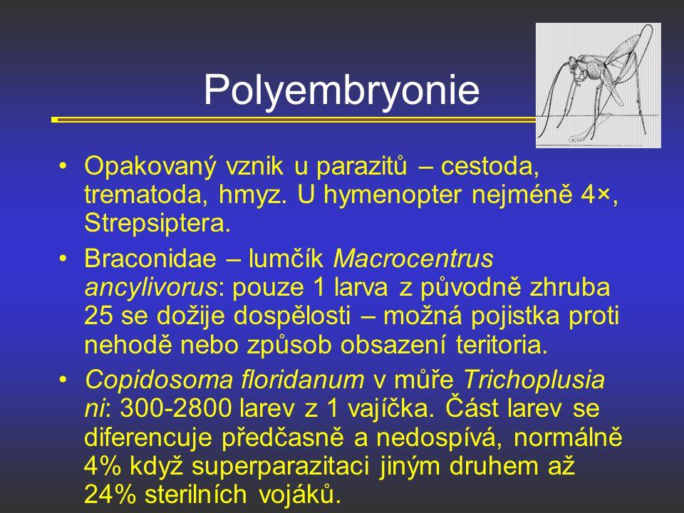 Polyembryonie Opakovaný vznik u parazitů – cestoda, trematoda, hmyz. U hymenopter nejméně 4×, Strepsiptera.