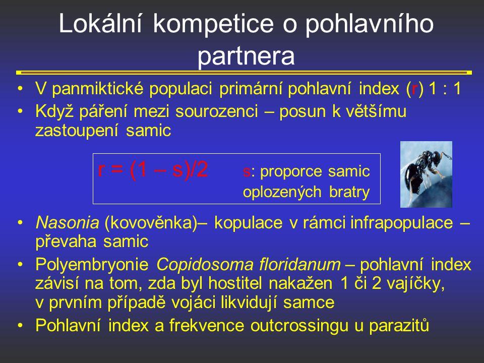 Lokální kompetice o pohlavního partnera