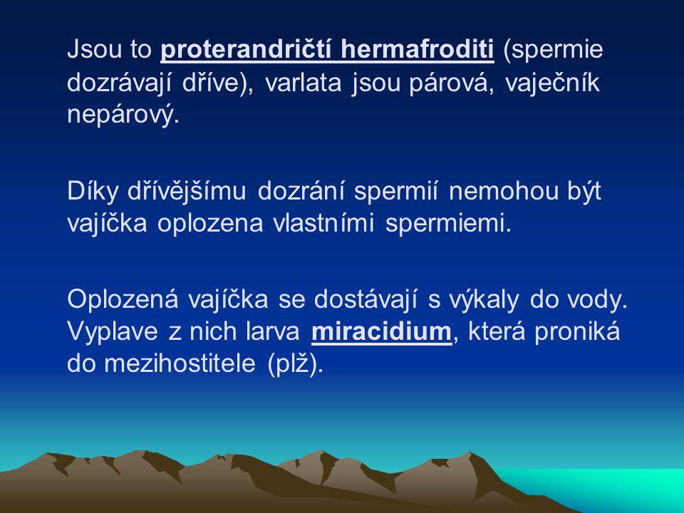 Jsou to proterandričtí hermafroditi (spermie dozrávají dříve), varlata jsou párová, vaječník nepárový.