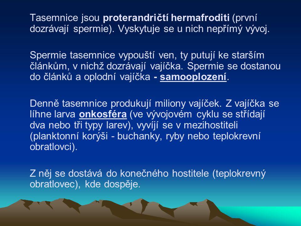 Tasemnice jsou proterandričtí hermafroditi (první dozrávají spermie)