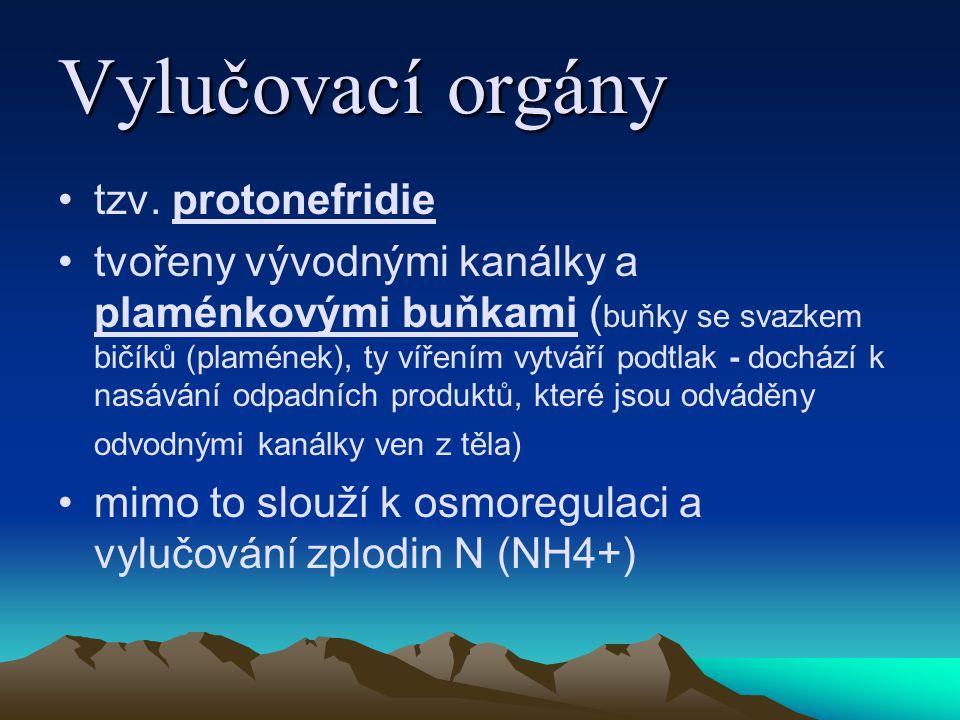 Vylučovací orgány tzv. protonefridie