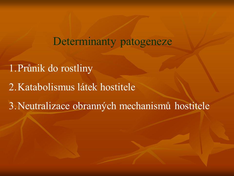 Determinanty patogeneze