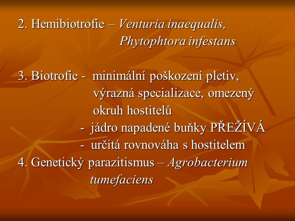 2. Hemibiotrofie – Venturia inaequalis,