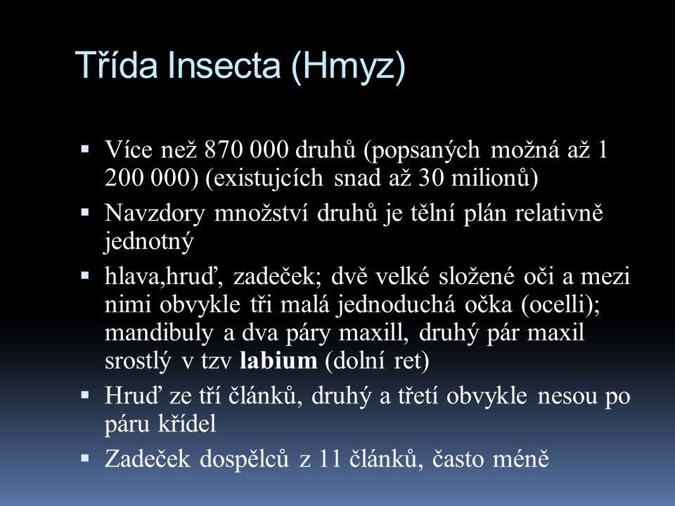 Třída Insecta (Hmyz) Více než 870 000 druhů (popsaných možná až 1 200 000) (existujcích snad až 30 milionů)