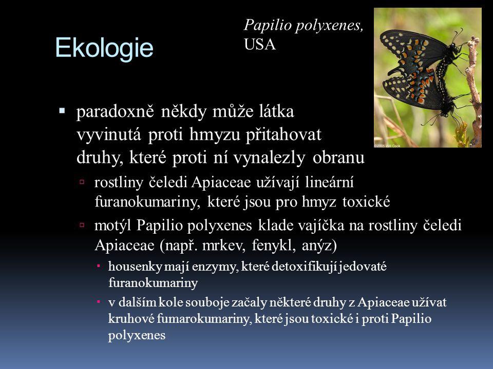 Papilio polyxenes, USA. Ekologie.