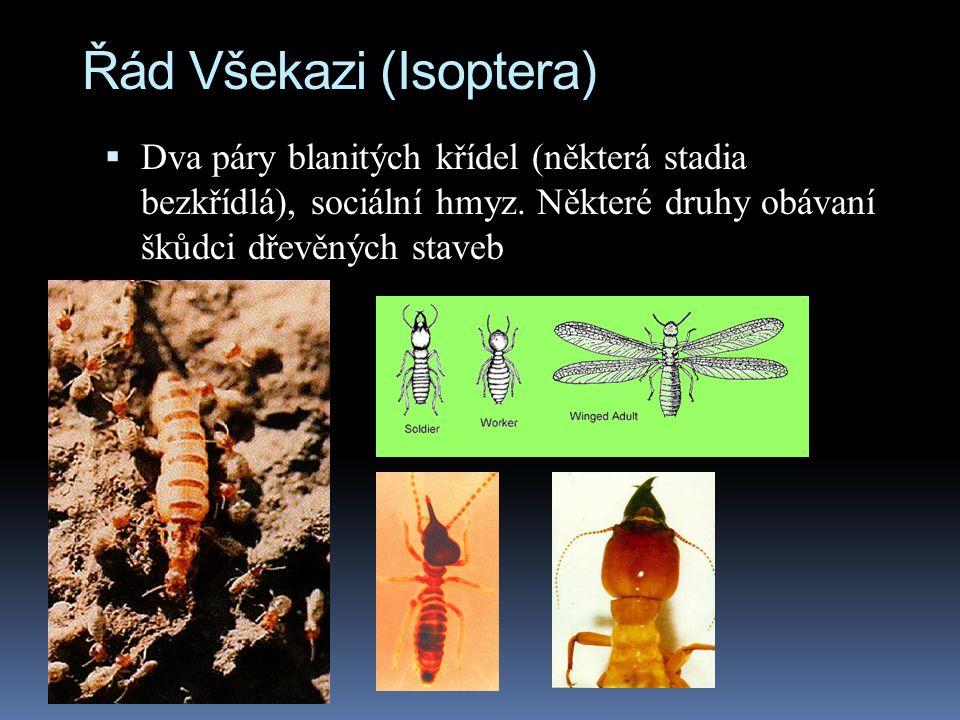 Řád Všekazi (Isoptera)
