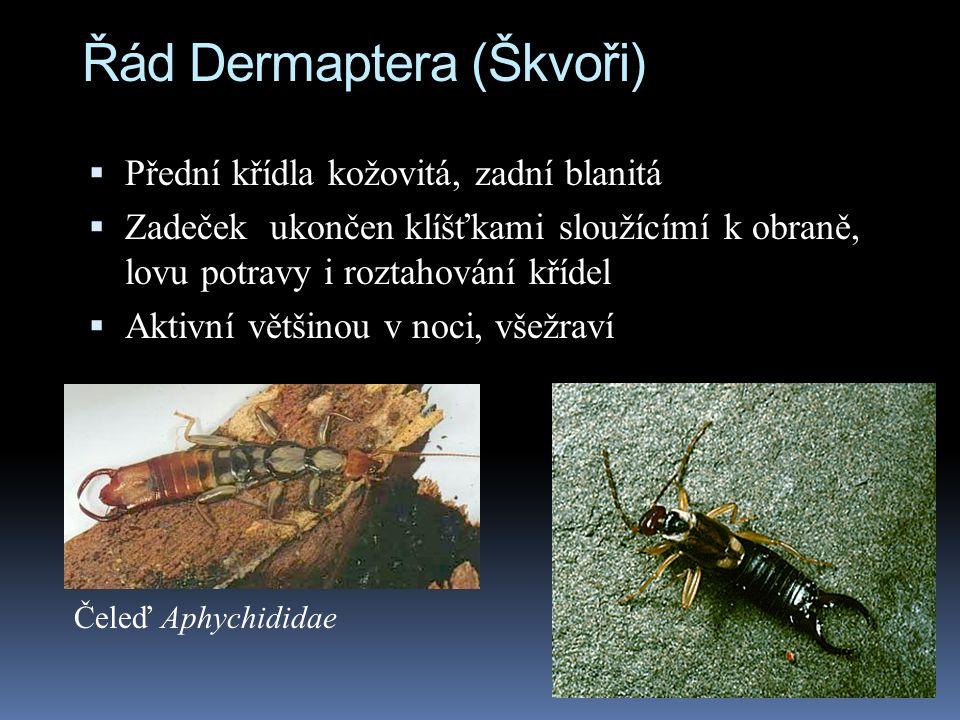 Řád Dermaptera (Škvoři)