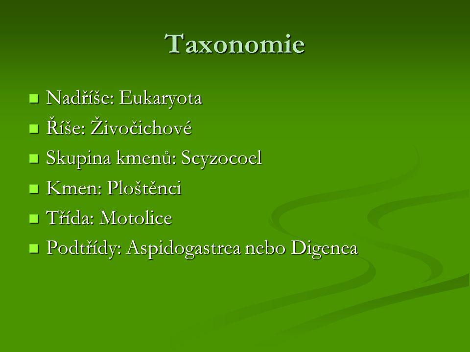 Taxonomie Nadříše: Eukaryota Říše: Živočichové