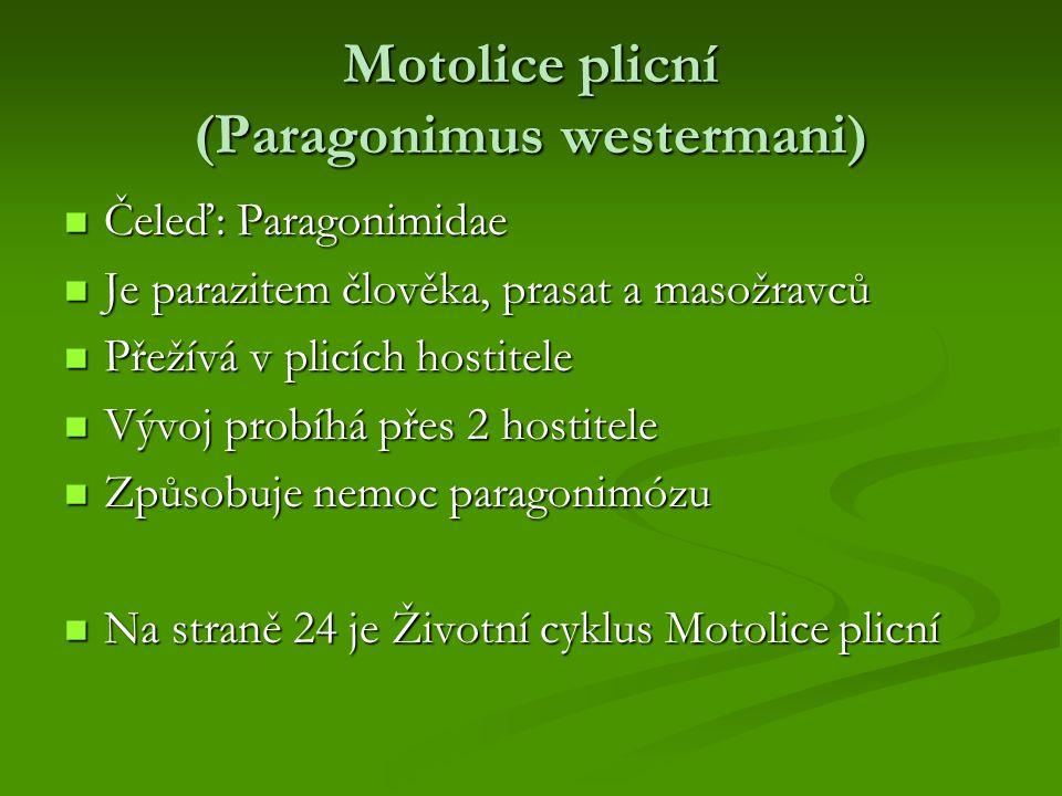 Motolice plicní (Paragonimus westermani)