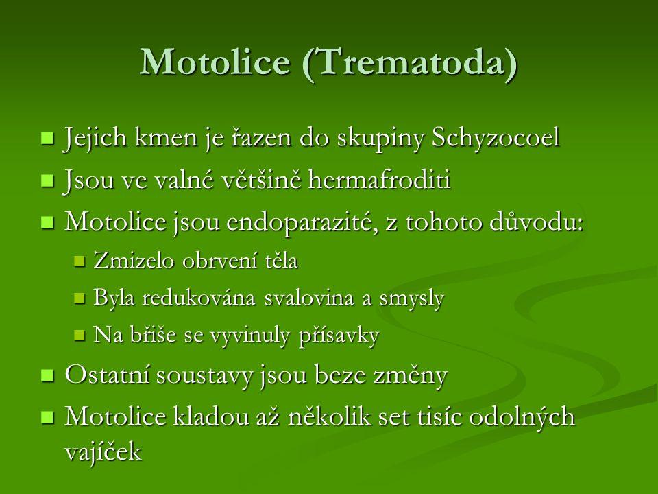 Motolice (Trematoda) Jejich kmen je řazen do skupiny Schyzocoel