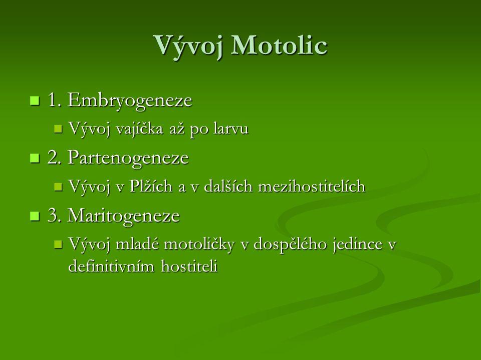 Vývoj Motolic 1. Embryogeneze 2. Partenogeneze 3. Maritogeneze
