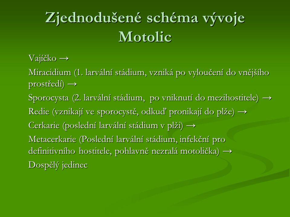 Zjednodušené schéma vývoje Motolic