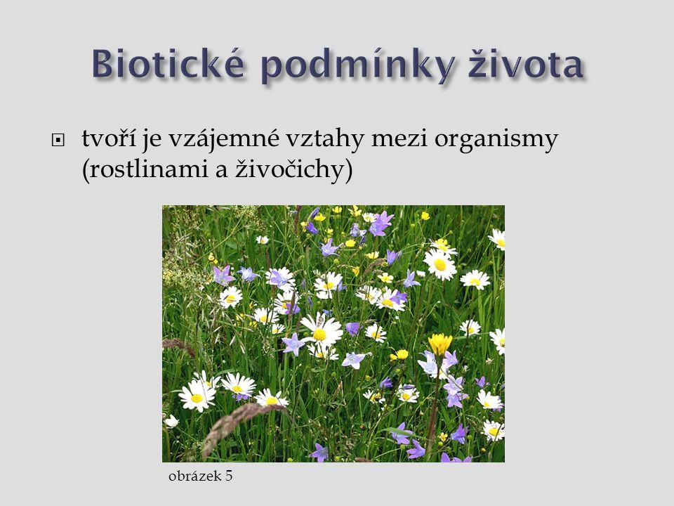 Biotické podmínky života