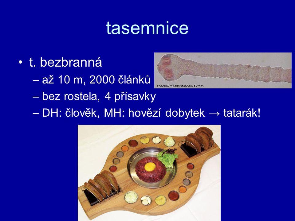 tasemnice t. bezbranná až 10 m, 2000 článků bez rostela, 4 přísavky