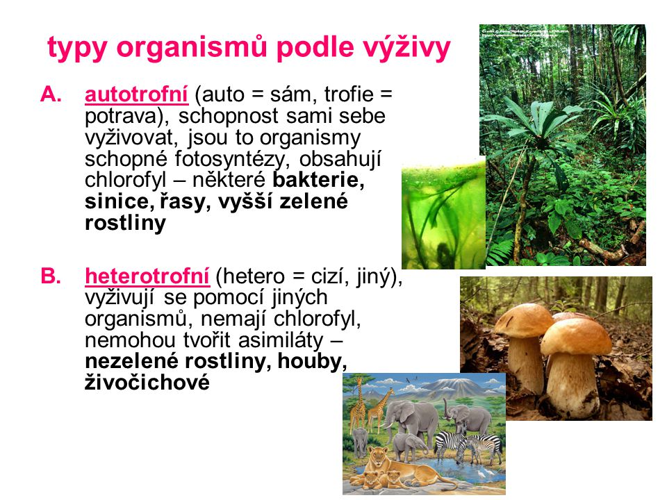 typy organismů podle výživy