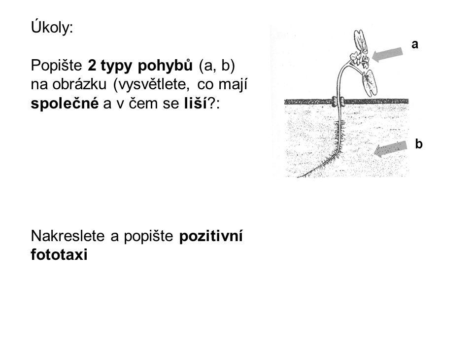 Nakreslete a popište pozitivní fototaxi