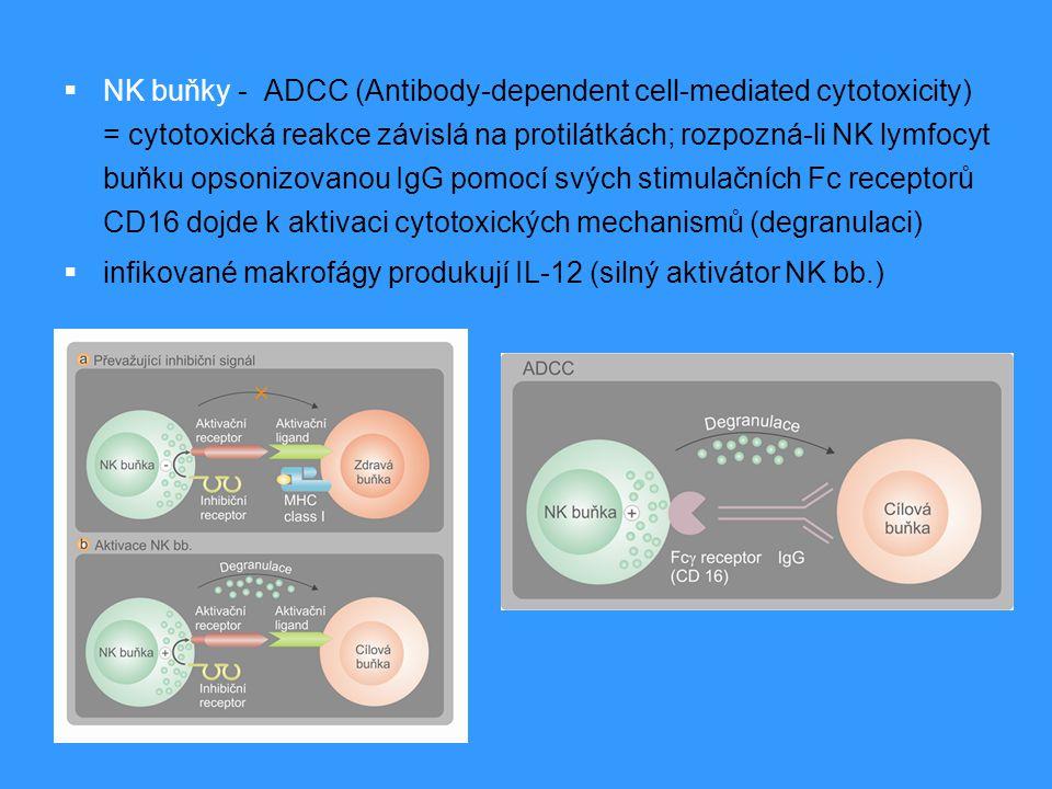 NK buňky - ADCC (Antibody-dependent cell-mediated cytotoxicity) = cytotoxická reakce závislá na protilátkách; rozpozná-li NK lymfocyt buňku opsonizovanou IgG pomocí svých stimulačních Fc receptorů CD16 dojde k aktivaci cytotoxických mechanismů (degranulaci)