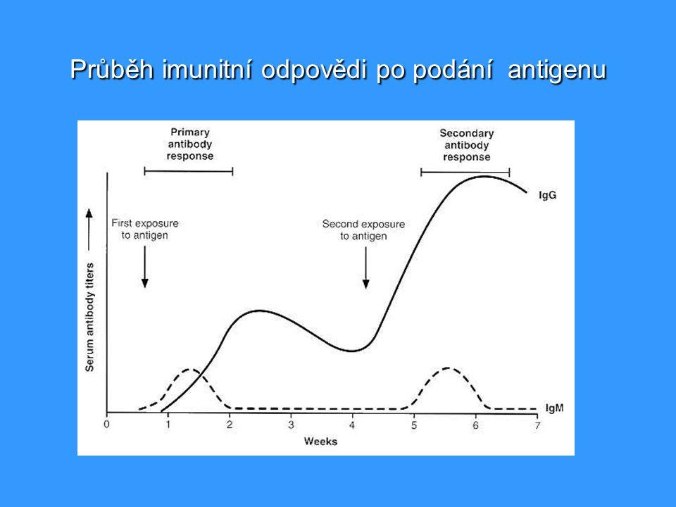 Průběh imunitní odpovědi po podání antigenu