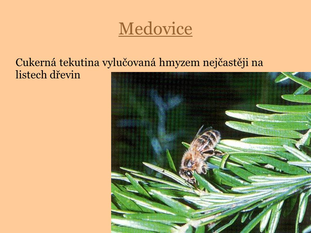 Cukerná tekutina vylučovaná hmyzem nejčastěji na listech dřevin