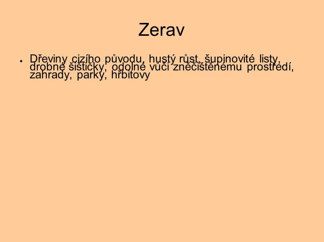 Zerav
