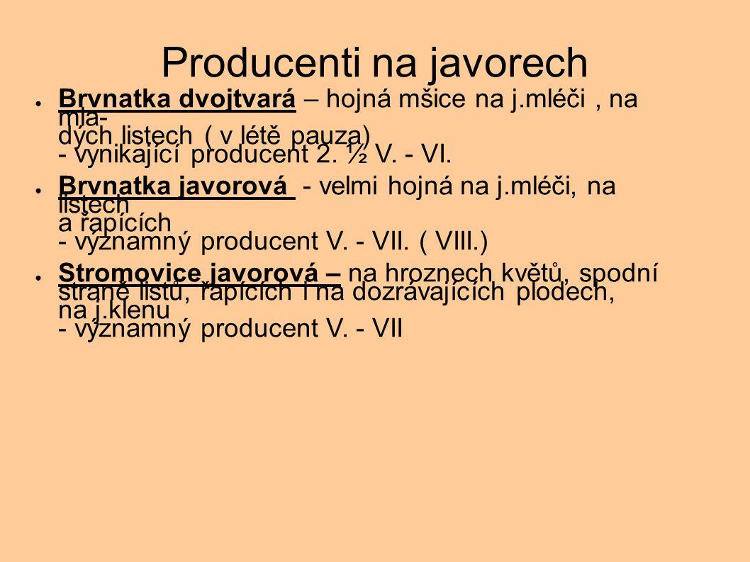 Producenti na javorech