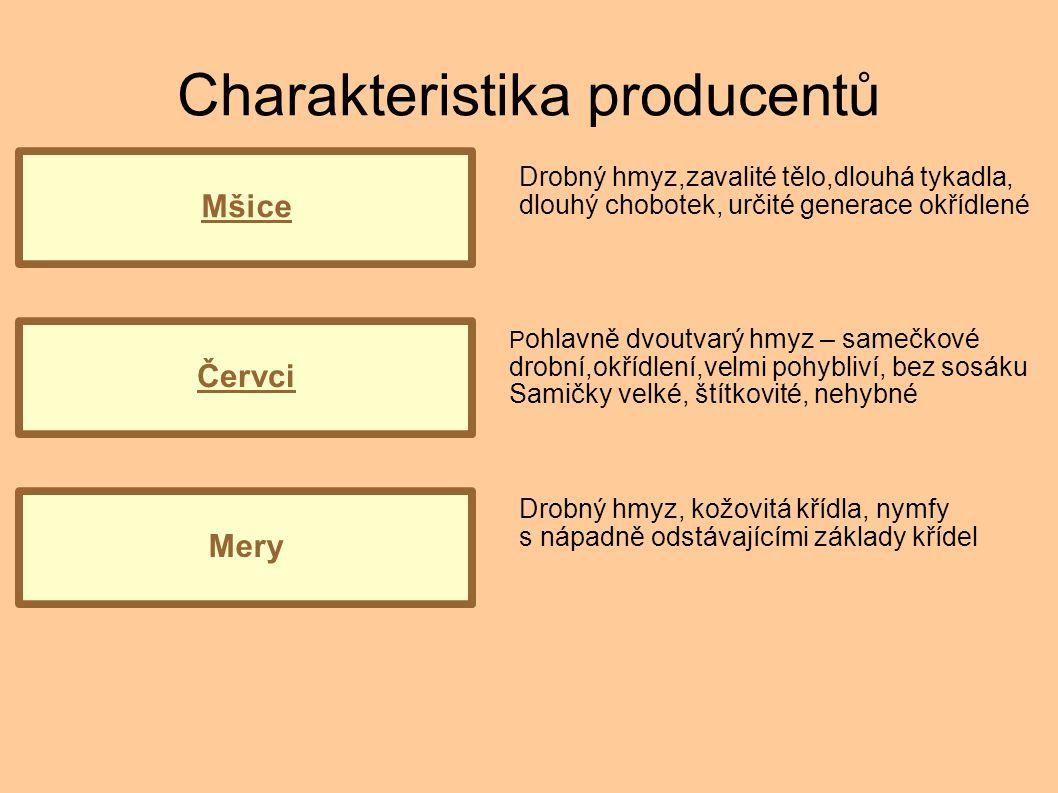 Charakteristika producentů