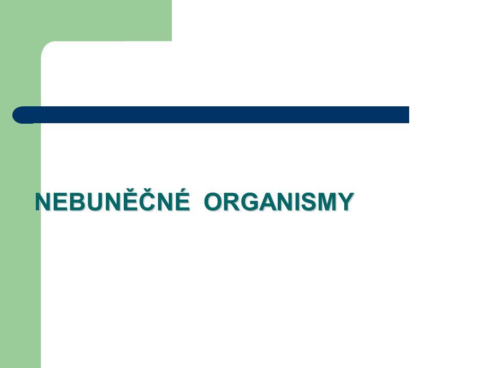 NEBUNĚČNÉ ORGANISMY