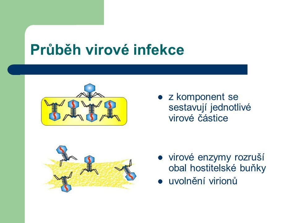 Průběh virové infekce z komponent se sestavují jednotlivé virové částice. virové enzymy rozruší obal hostitelské buňky.