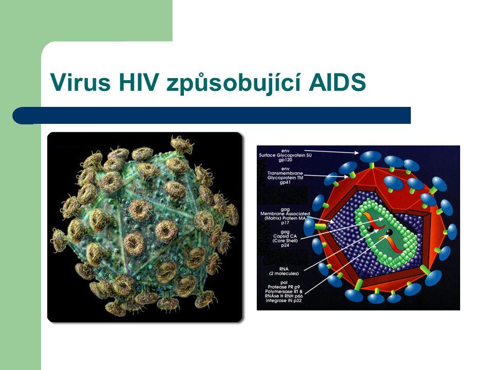 Virus HIV způsobující AIDS