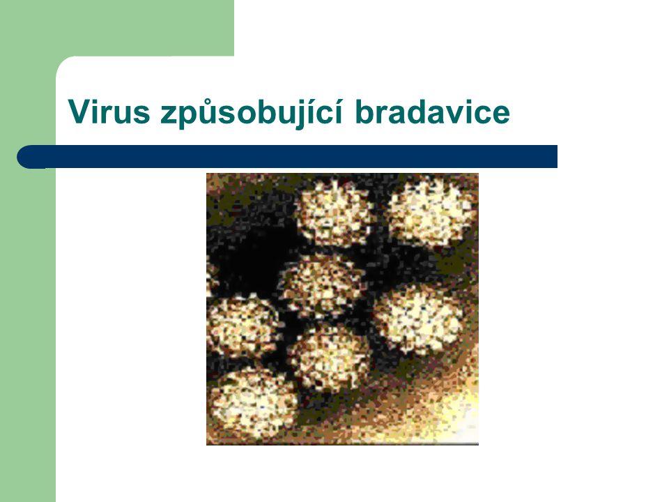 Virus způsobující bradavice