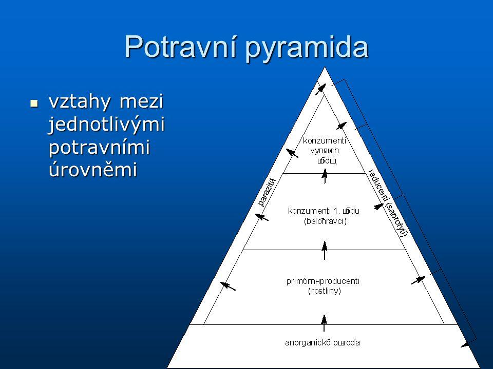 Potravní pyramida vztahy mezi jednotlivými potravními úrovněmi