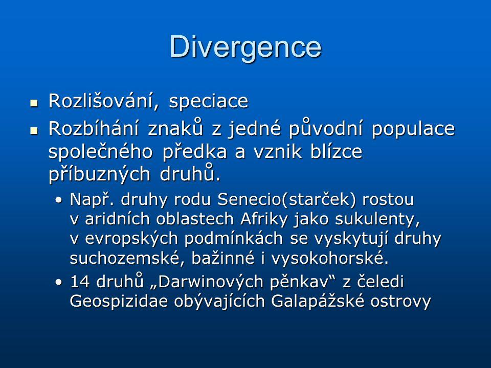 Divergence Rozlišování, speciace