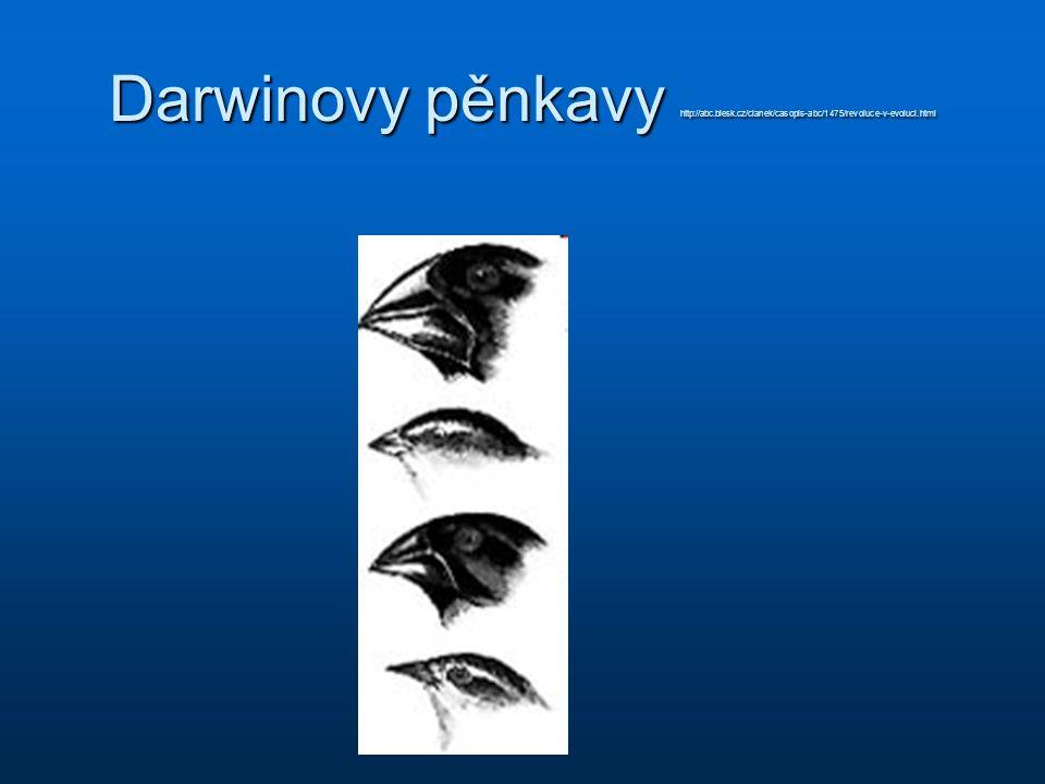 Darwinovy pěnkavy http://abc. blesk