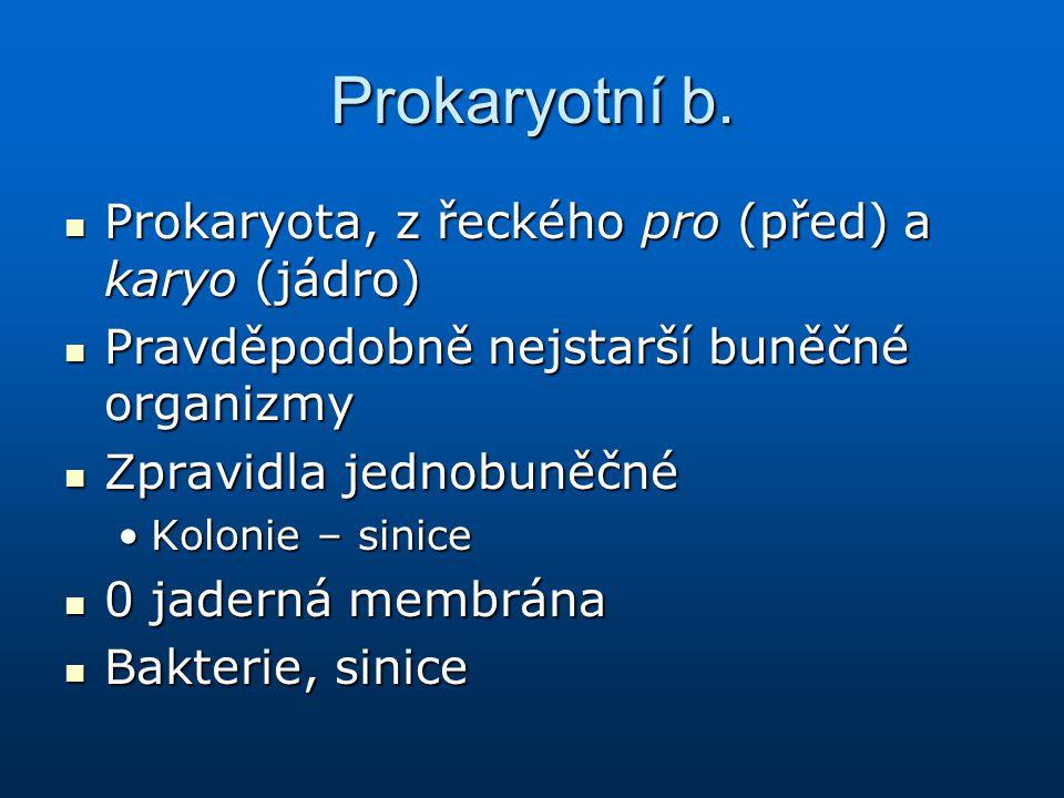 Prokaryotní b. Prokaryota, z řeckého pro (před) a karyo (jádro)