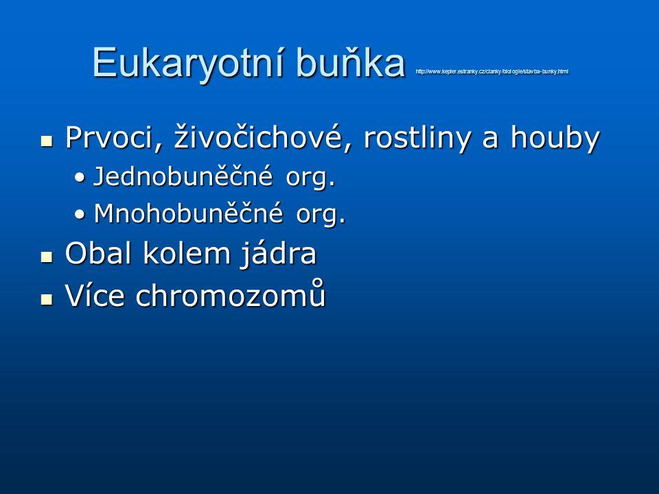 Eukaryotní buňka http://www. kepler. estranky