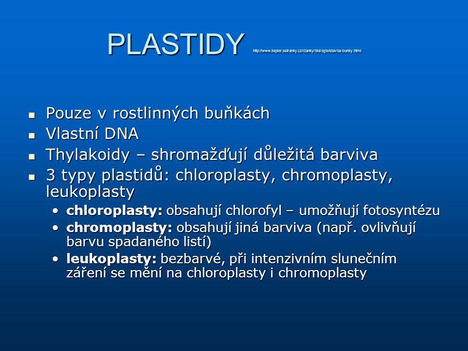 PLASTIDY http://www. kepler. estranky. cz/clanky/biologie/stavba-bunky