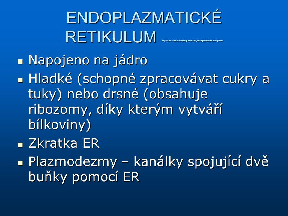 ENDOPLAZMATICKÉ RETIKULUM http://www. kepler. estranky