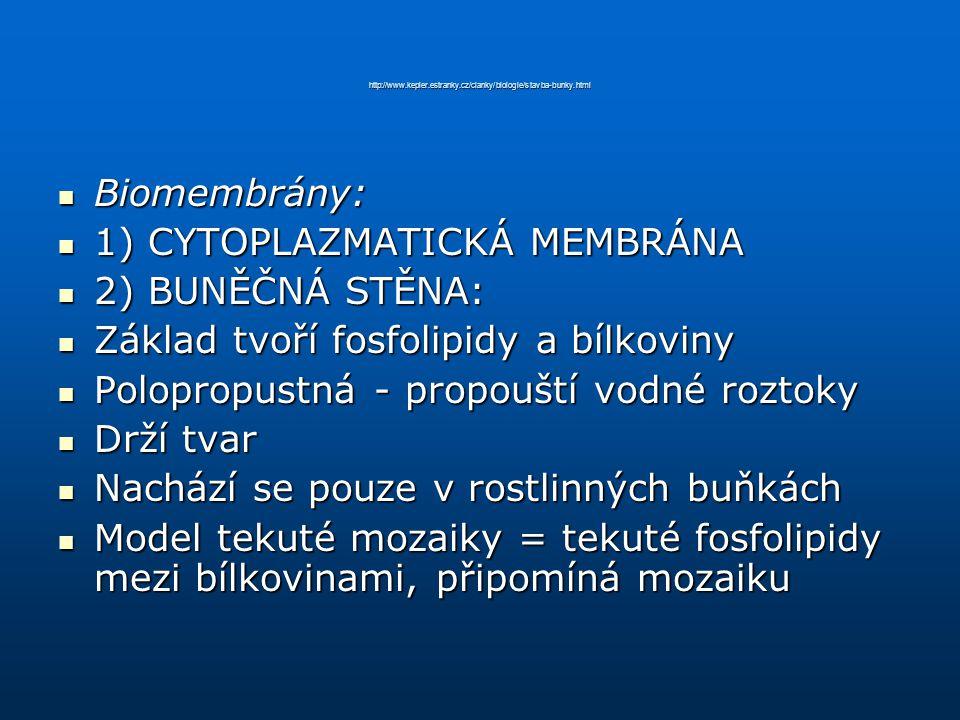 1) CYTOPLAZMATICKÁ MEMBRÁNA 2) BUNĚČNÁ STĚNA: