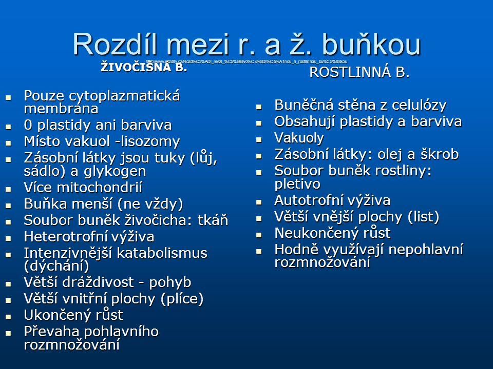 Rozdíl mezi r. a ž. buňkou http://www. rozdily