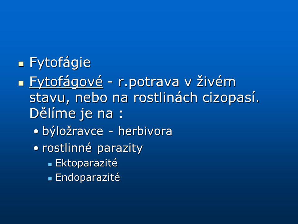 Fytofágie Fytofágové - r.potrava v živém stavu, nebo na rostlinách cizopasí. Dělíme je na : býložravce - herbivora.