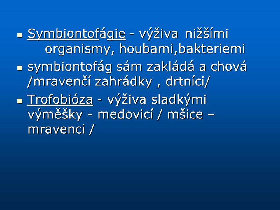 Symbiontofágie - výživa nižšími organismy, houbami,bakteriemi