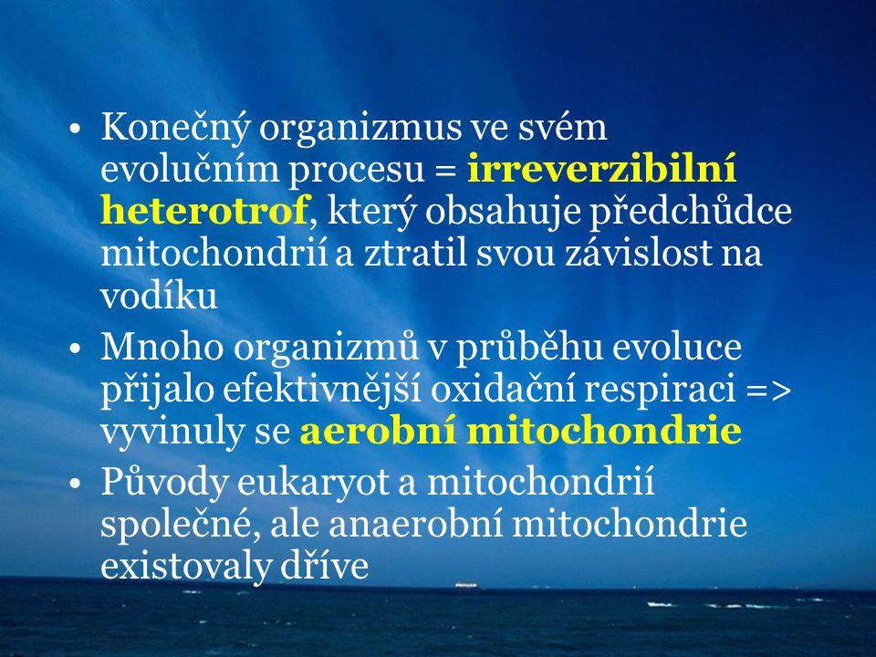 Konečný organizmus ve svém evolučním procesu = irreverzibilní heterotrof, který obsahuje předchůdce mitochondrií a ztratil svou závislost na vodíku