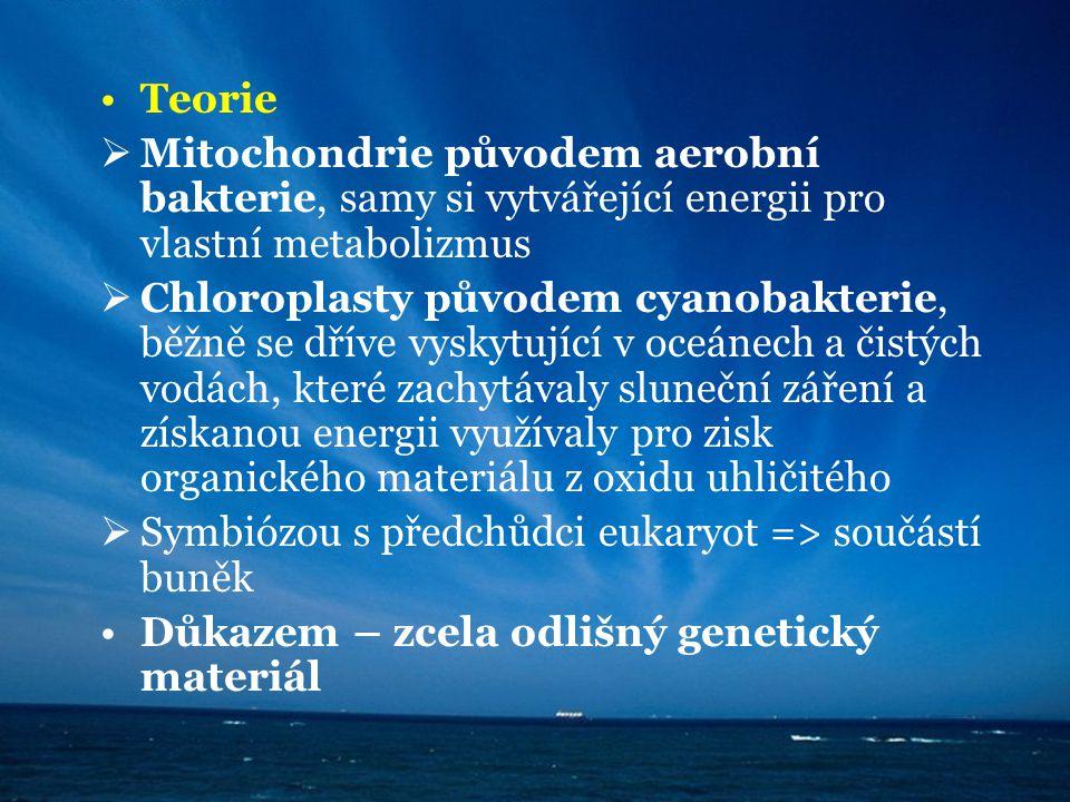 Teorie Mitochondrie původem aerobní bakterie, samy si vytvářející energii pro vlastní metabolizmus.