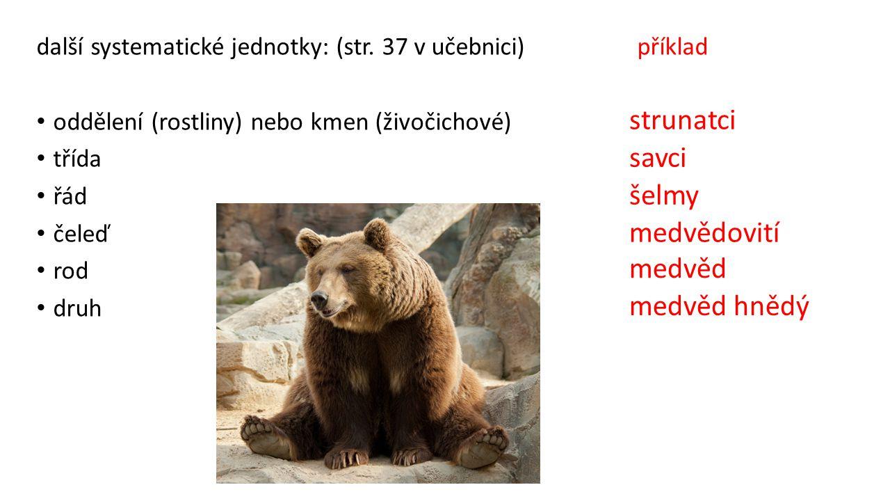 strunatci savci šelmy medvědovití medvěd medvěd hnědý